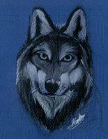 Wolf Face by Lucky978