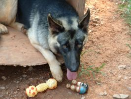 Xena with Toys by michelled85