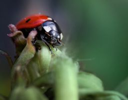 Ladybird Lunchtime by Sarahorsomeone
