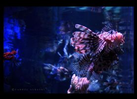 Fish by Saher4ever
