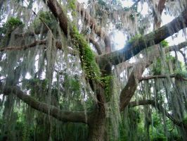 Mossy Tree by hollybolly95