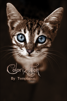 Cat colorize. by DevilFaust