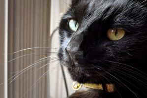 Cat Close-Up by ohno107