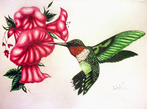 Broad-tailed hummingbird by MalaMi95