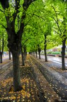 Tree line in Boston by Rikitza