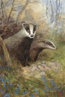 Badgers by Mad-Margaret