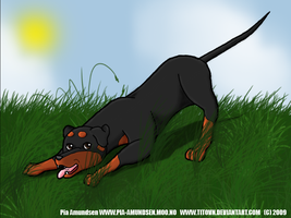 Playful Doberman by titovn