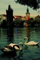 Charles and the Swans by sakarkral