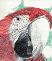 Red Parrot by Cindy-R