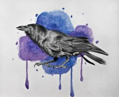 Crow by ashleyjennings