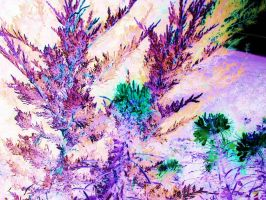 Sychedelic Plant by opium-luvs-blue