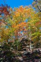 Kentucky Color by Chris-Conway