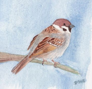 Treesparrow by crazy-fruit