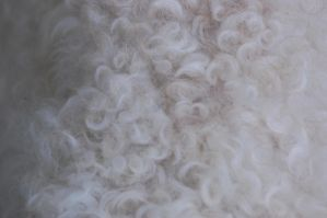 Curly dog fur by katiezstock