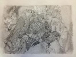 Parrots - Pencil by TheT-Rex
