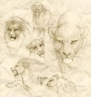 Lion sketches by OmegaLioness