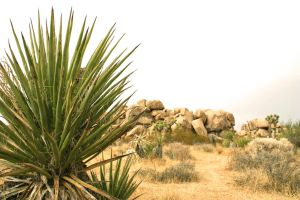 Desert background 1 by photohouse