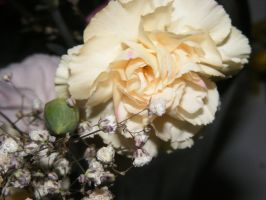 carnations and baby's breath by BlueIvyViolet
