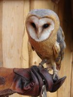 owl at work by katatoy