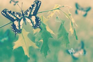 Folded Butterfly by DesMYM
