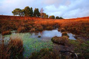 New Forest Revisited by JakeSpain