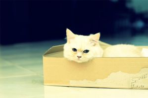 Cat inside Box by SilentPain0
