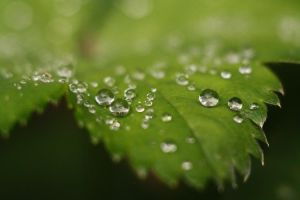After the rain by GertuSaariste