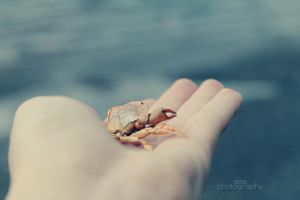 Crab by sisselPhotography
