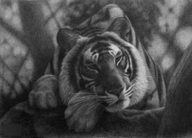 No Mood For Hunting, pencil by Panthera11