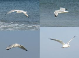 Seagulls 3 by stormlor