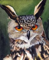 Horned Owl by drgnelf
