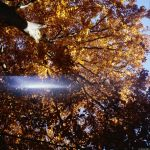 autumn tree by Picture-Bandit