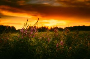 Warm light of the evening by dn1w3r