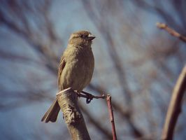 Sparrow in Tree by NathansMommy1787