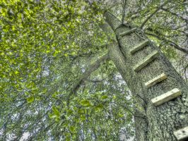 Tree Ladder HDR by thecheekymunky