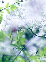 Fresh by valeriemonthuit