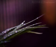 First rain of the year by Alessia-Izzo