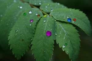 Raindrops of Color by Elenawen