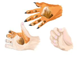 Anthro Fox TF hand by Chromedragon360