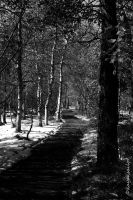 path through trees and snow by kayaksailor