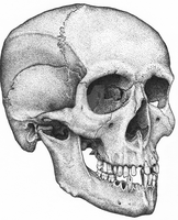 Human Male Skull by BlackPariahDog