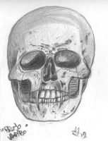 Skull/Face Studies and Sketches by CiNiTriQs