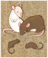 rattie babies by mybirdy