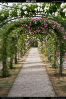 Rose garden 8 by Wess4u