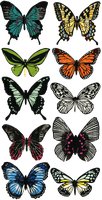 Butterfly collection by Solinni