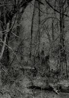 The dark woods... by thewolfcreek