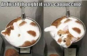 Catuccino by cosenza987