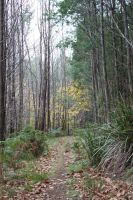 Forrest Path Stock 4 by CNStock