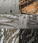 Tree Bark Texture Pack by CinderGhostStock
