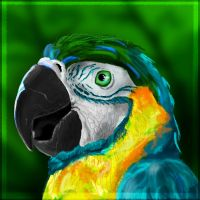 I'm a parrot, krah! by Dauganor